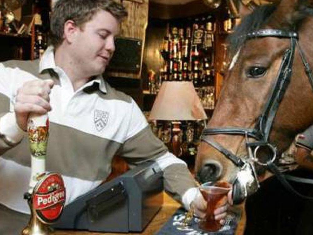 Άλογο θαμώνας σε μπαρ!