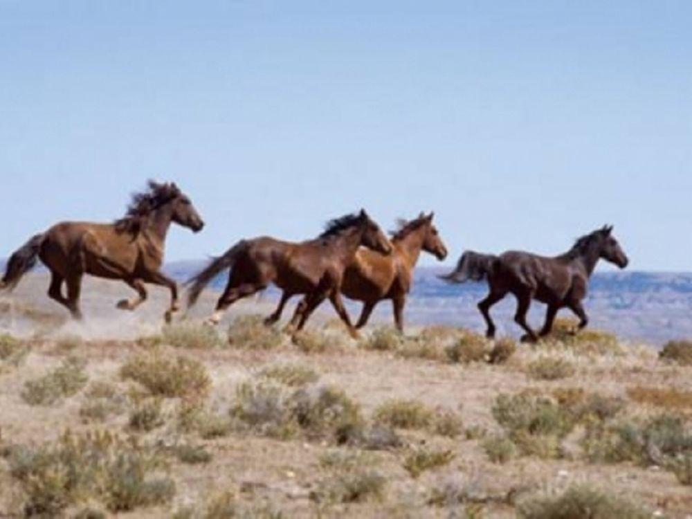 Σκότωσαν άγρια άλογα στην Ξάνθη