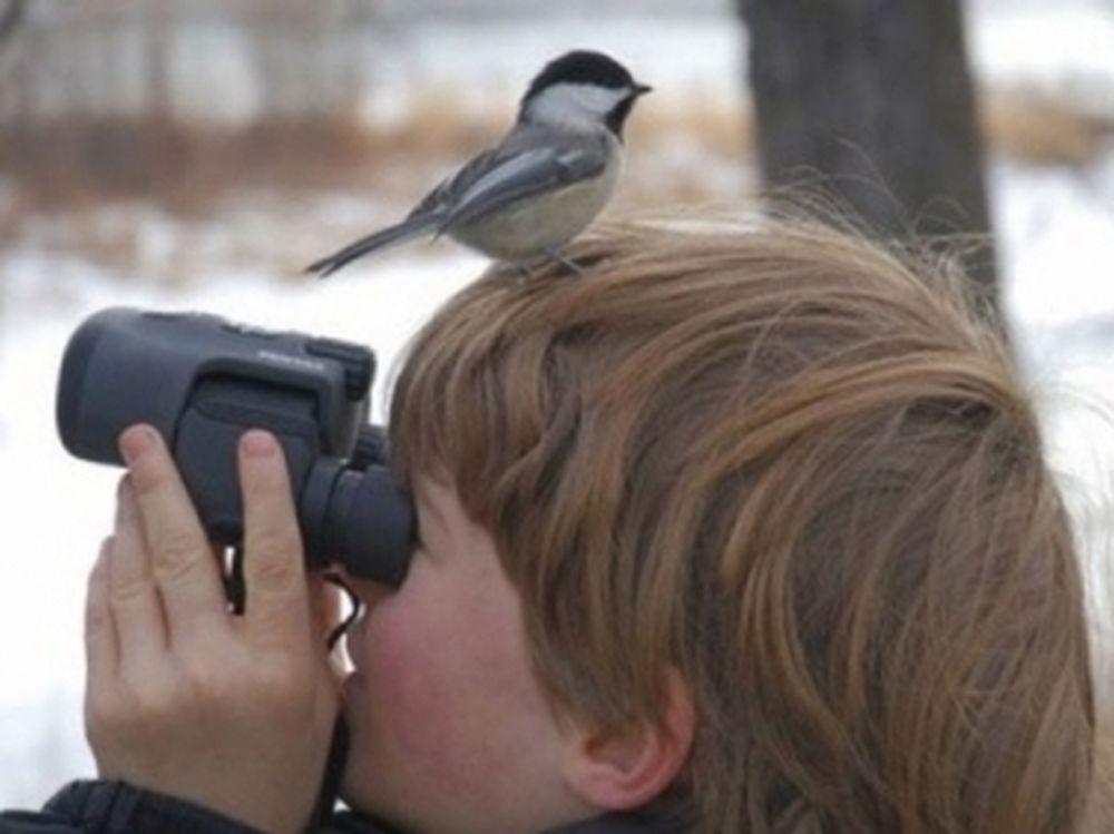 Bird Watching αλά ελληνικά