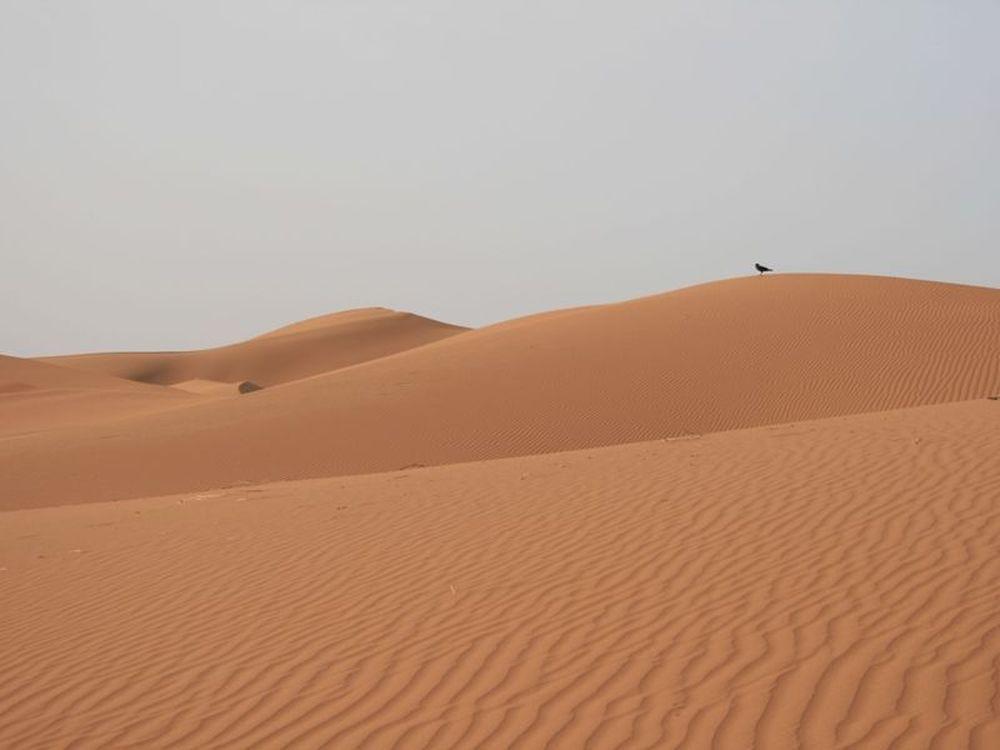 Μαροκινός νικητής