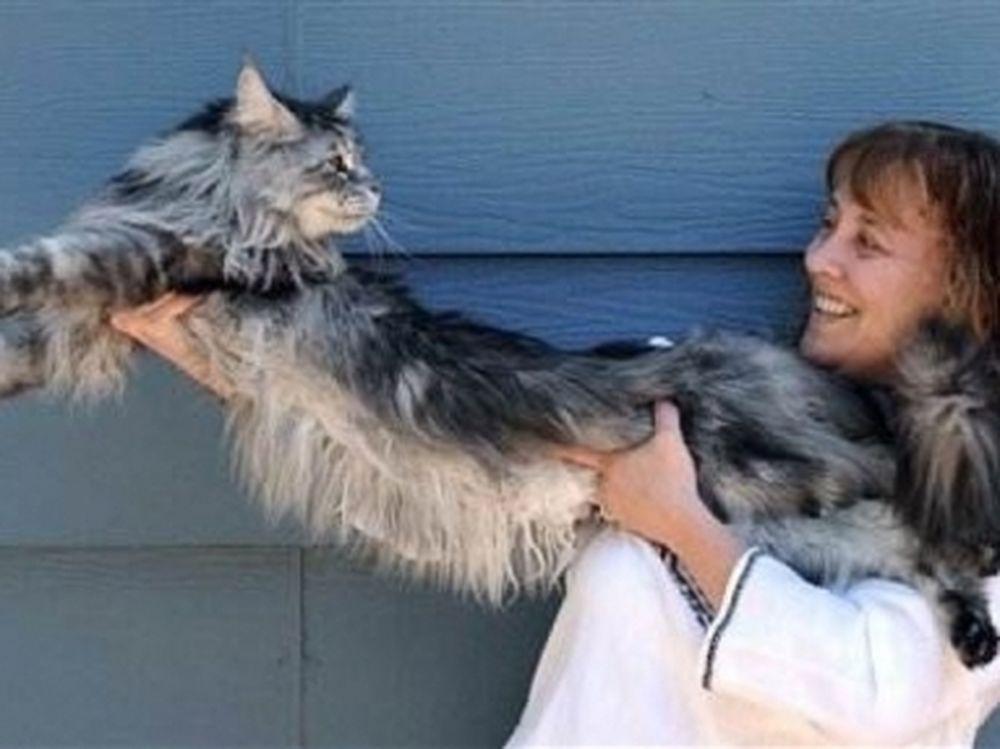 Ο πιο μακρύς γάτος στον κόσμο!
