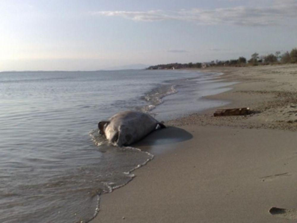 Νεκρό δελφίνι στην Πρέβεζα