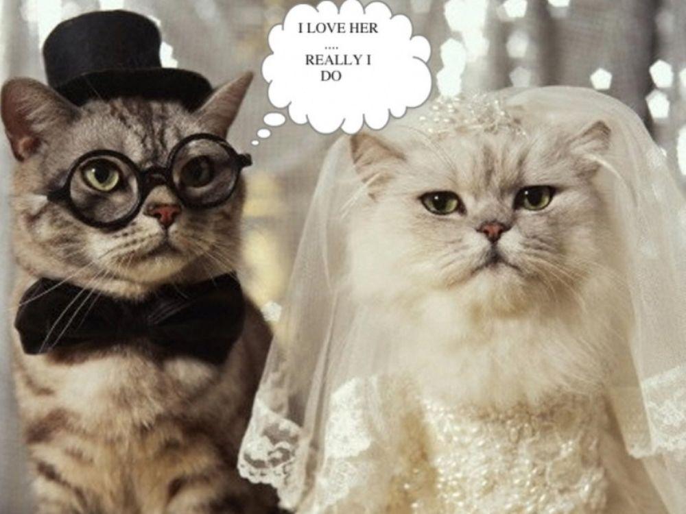 Γάμος στο μήνα των Διδύμων