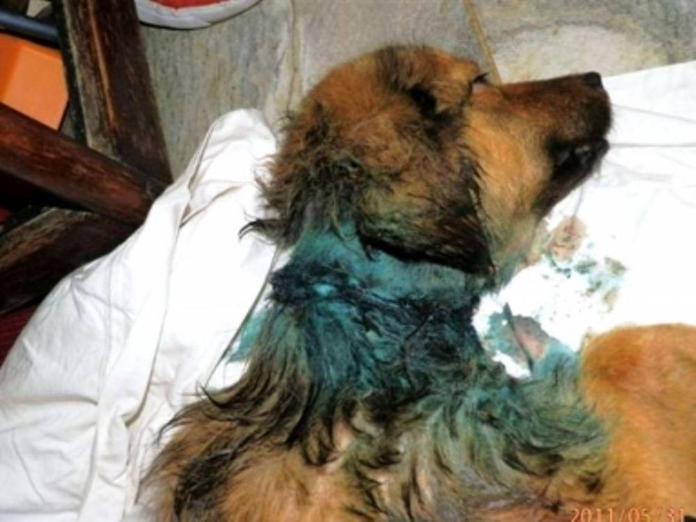 Έσωσαν σκυλίτσα