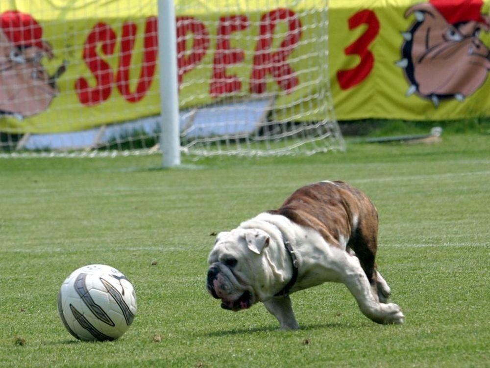 Το σκυλί-σύμβολο του Super 3