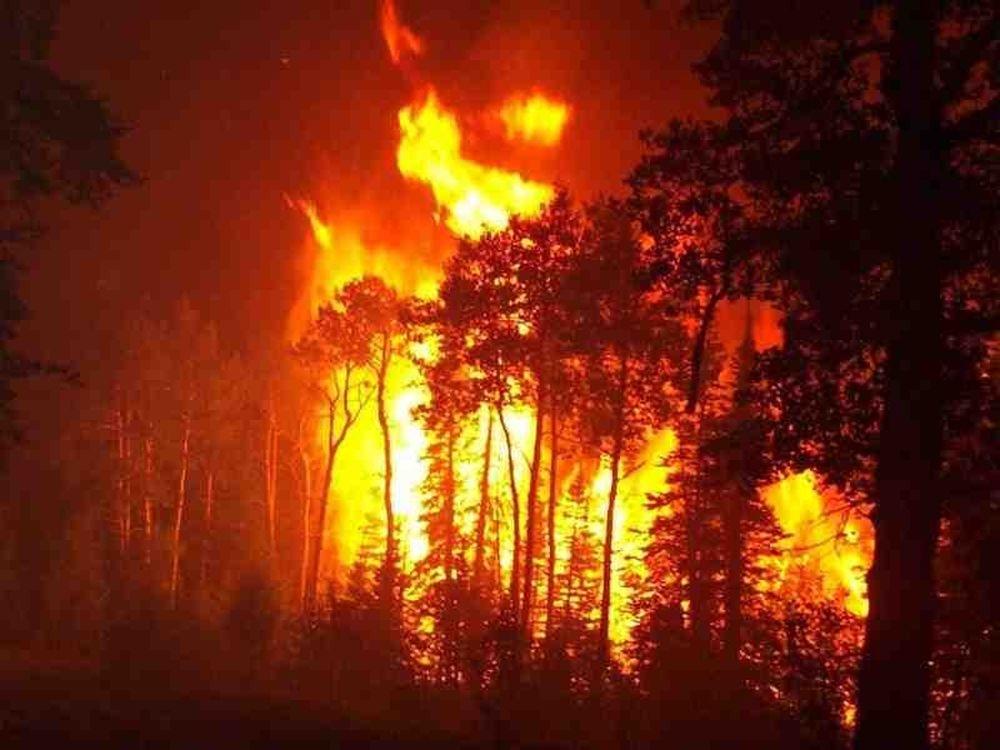 Φωτιά στην Αμαλιάδα