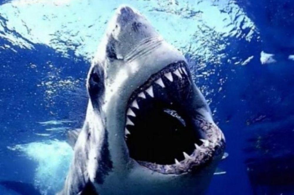 Δέστε... λαβράκια και αφήστε τους... καρχαρίες