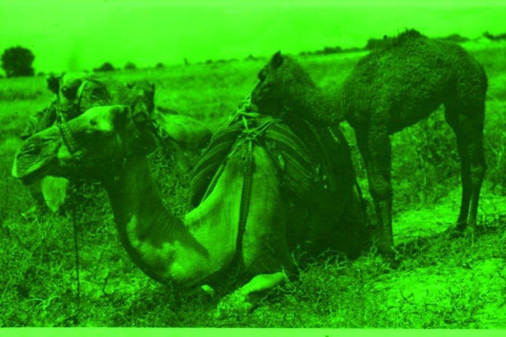 Ροναλντίνιο,  Σισέ και πράσινες… καμήλες