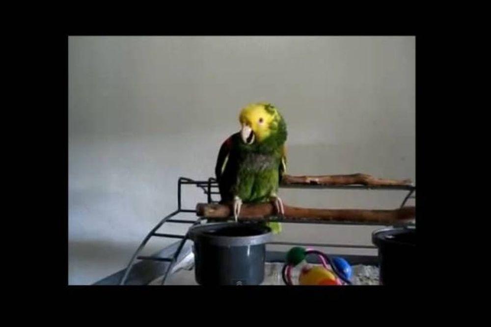 Παπαγάλος... μωρό! (video)