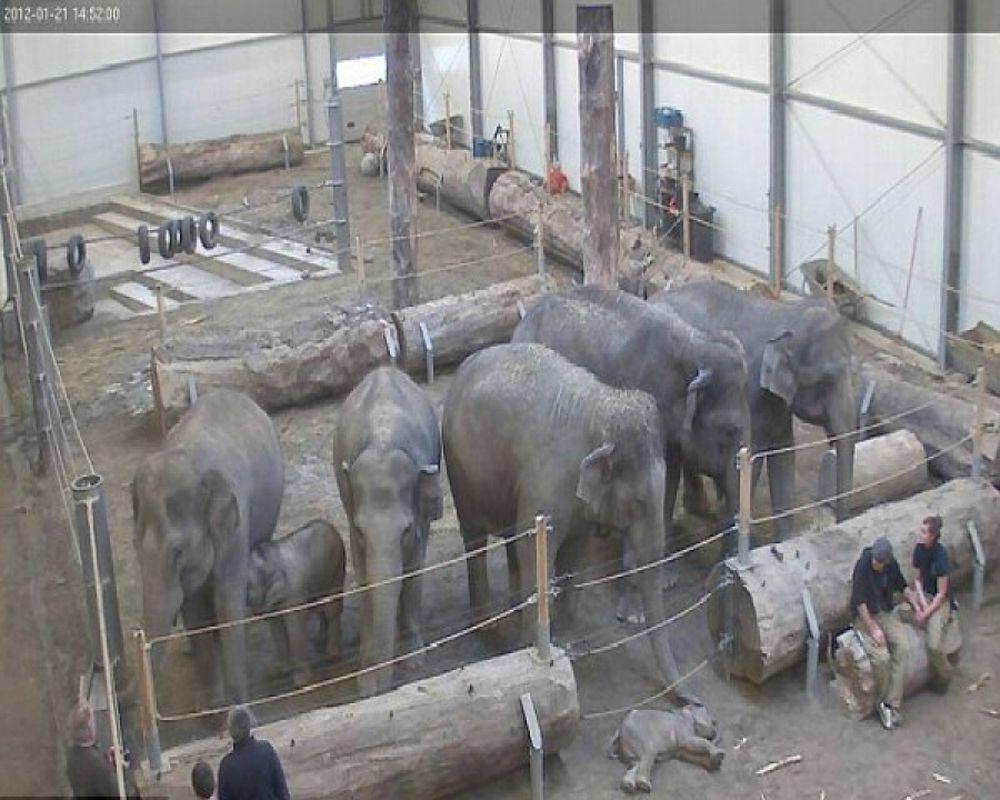 Η συγκινητική φωτογραφία με το νεκρό ελεφαντάκι