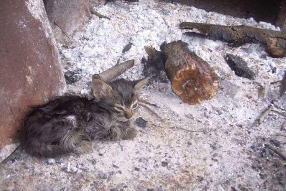 Σκότωνε και έτρωγε γάτες