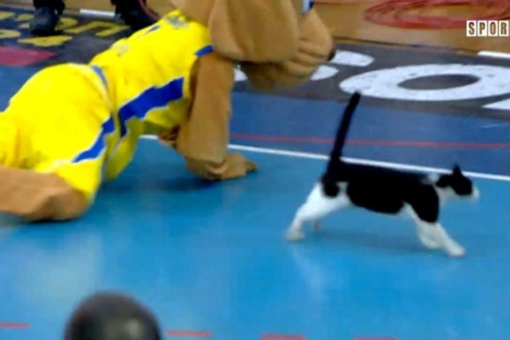 Γάτα vs... σκύλος στο Ισραήλ