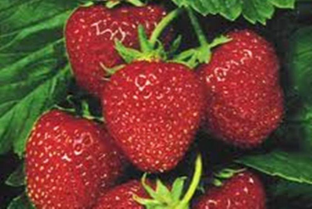 Φράουλα !Ένα φρούτο υψηλής διατροφικής αξίας