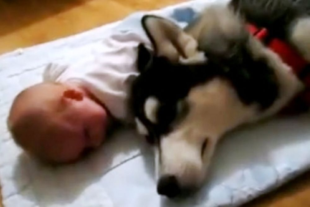 Πώς ένας σκύλος προσπαθεί να κάνει ένα μωρό να σταματήσει να κλαίει!