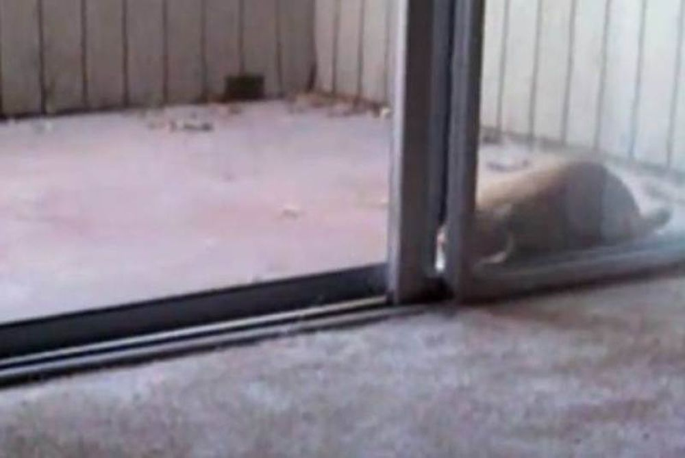 Video: Οι γάτες ανοίγουν πόρτες