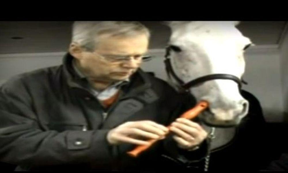 Αλογο... παίζει σε φλογέρα το «φεγγαράκι μου λαμπρό»