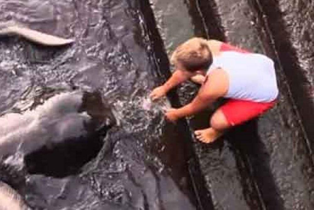 Δεν θα φανταστείτε με τι θαλάσσιο ζώο κάνει παρέα το παιδάκι! (video)