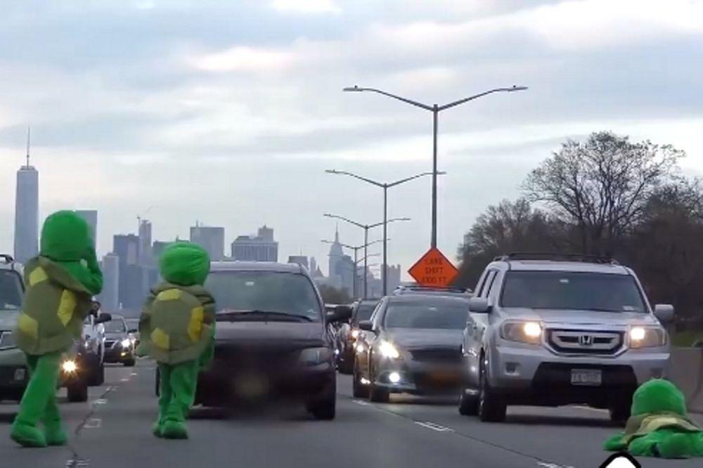Πανικός: Οι χελώνες κατέκτησαν την Εθνική Οδό! (video)