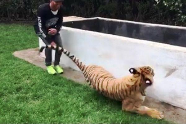 Ο Λουίς Χάμιλτον τρομάζει τίγρη! Δείτε την αντίδρασή της! (video)