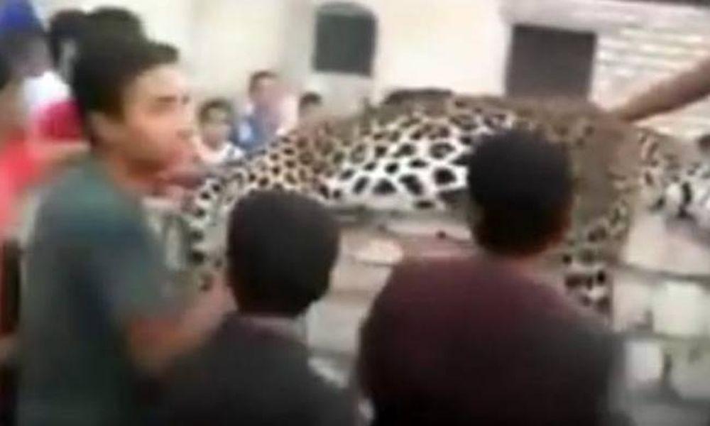 Βίντεο σοκ: Λεοπάρδαλη ξέφυγε από καταφύγιο άγριων ζώων και σκότωσε 9χρονη