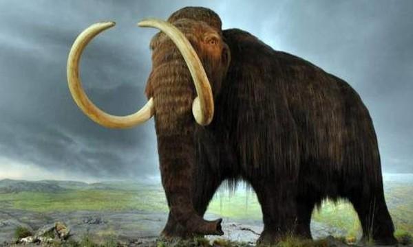 Έρχεται η… νεκρανάσταση: Επιστρέφουν στη Γη τα μαμούθ!