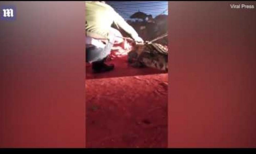 Βίντεο-σοκ: Κροκόδειλος αρπάζει από το κεφάλι άντρα!