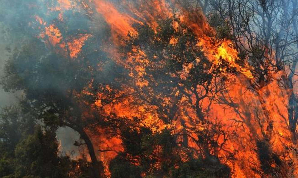 Φωτιά στη Δάφνη πίσω από το σταθμό του μετρό «Άγιος Ιωάννης»